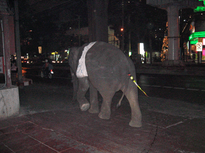 An Elephant on a Bangkok Street