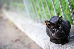 This Cat is Black by Farhan Shaheen