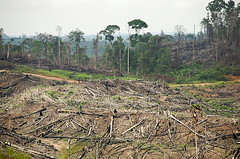 Turning the Page on Rainforest Destruction: Children's Books and the Future of Indonesia's Rainforests by Rainforest Action Network