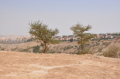 view of maale adumim settlement by helga tawil souri
