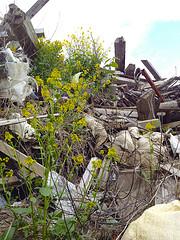 瓦礫に咲く花 by gnta