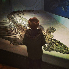 Ichthyosaur by cole007