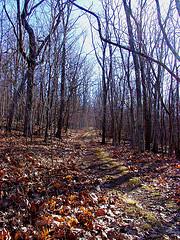 Virginia 2006, by hawkwing3141