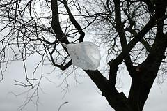 A plastic bag on a tree, by dailydog
