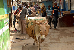 Lamu - carrying cement, by DonkeySanctuary