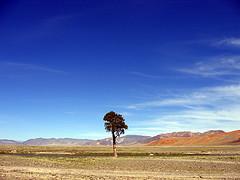 Lone Tree - Mongolia Landscape, by tiarescott