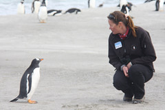 The Falkland Islands - Penguin Chat by cj_and_dan