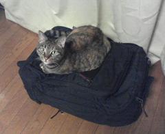 旅行かばんとネコ